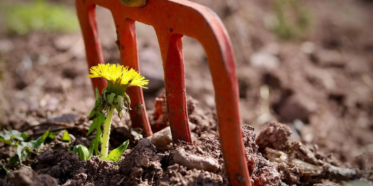 Que faire au jardin… en avril, mai et juin