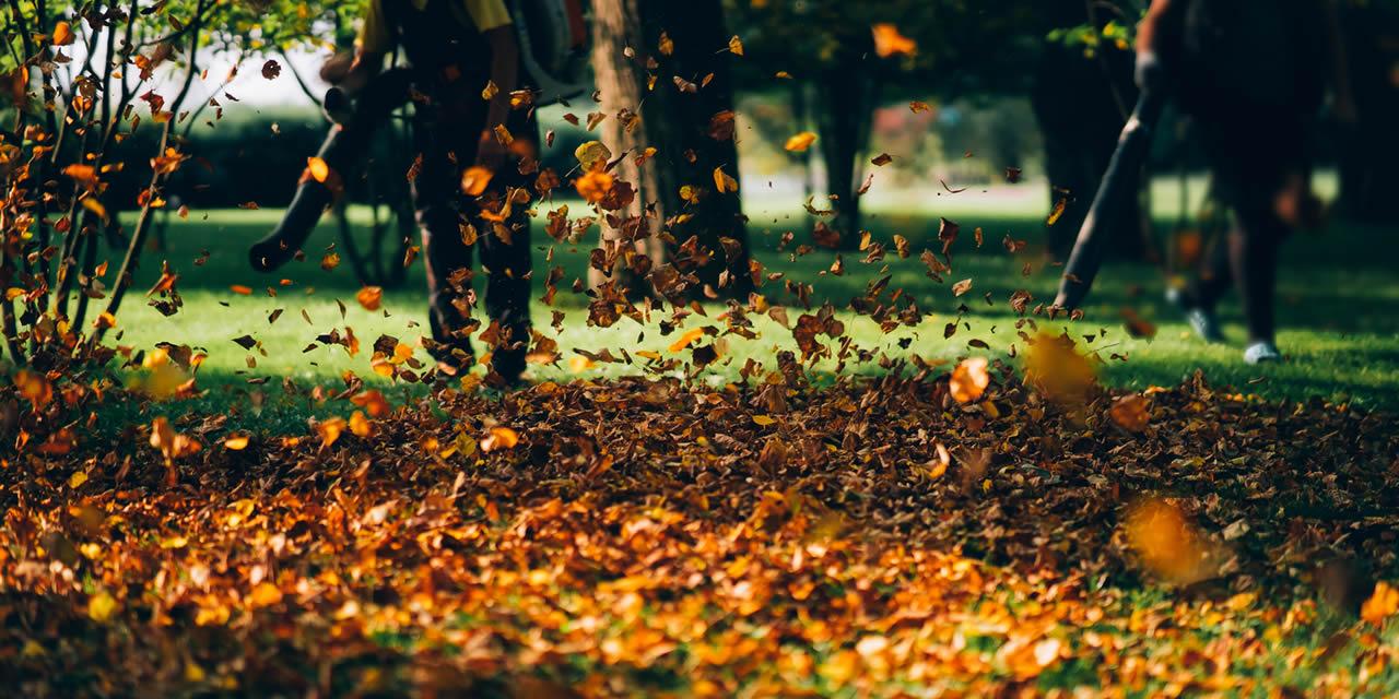 Que faire au jardin… en octobre, novembre, décembre