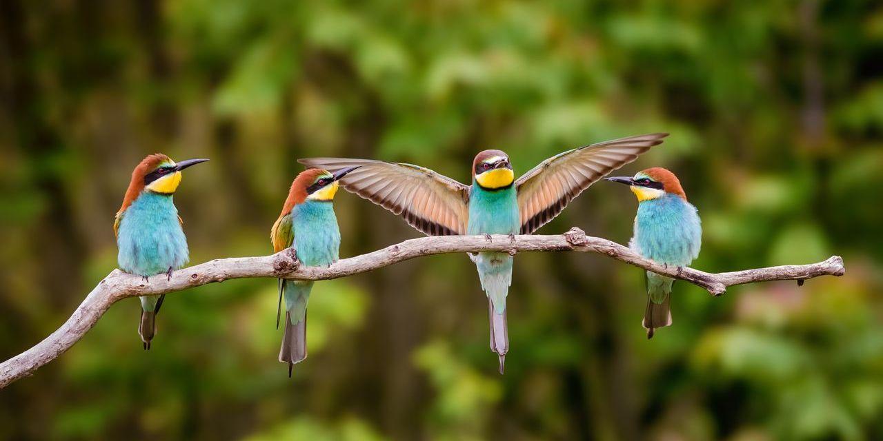Accueillir la biodiversité au jardin – Les oiseaux